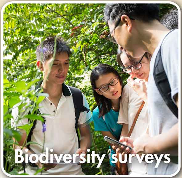 Biodiversity surveys