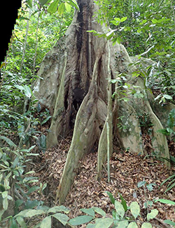 Bukit Timah Nature Reserve: A Model for Conservation