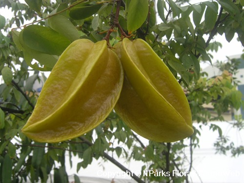Ripe yellow fruits