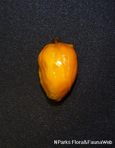 Fruit with skin removed.