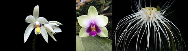 Tips for Growing Orchids in Apartments