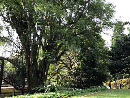 Discovering Trees Around Raffles Building
