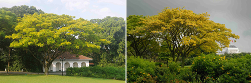Green Treasures of the Istana
