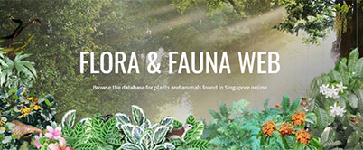 Exploring Upgraded Flora & Fauna Web