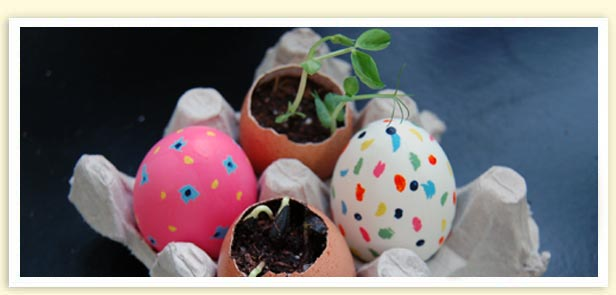 Get Cracking with Eggshells in Your Garden