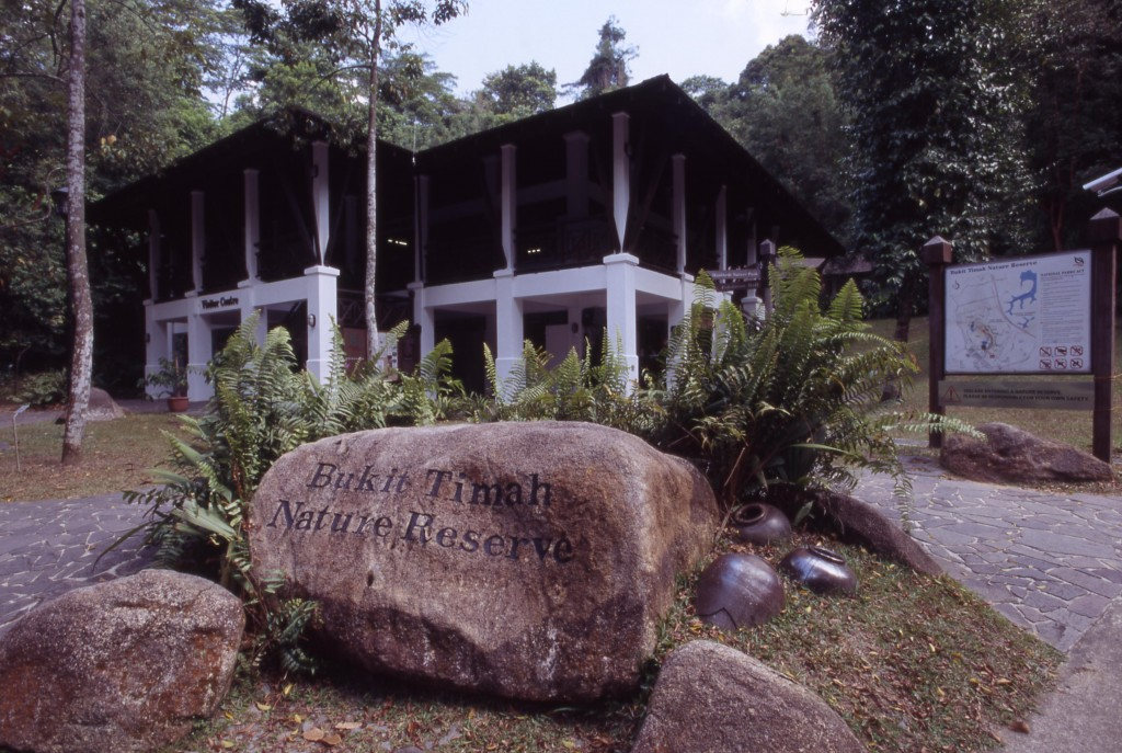 Forest Feature: Bukit Timah, In Brief