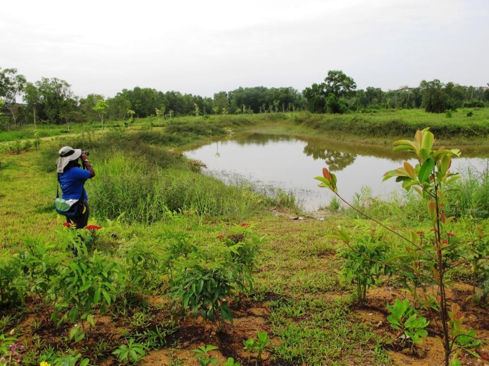 Barefoot Birding In The Heart Of Tampines