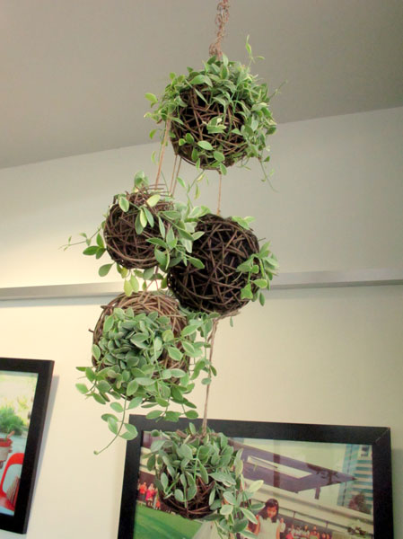 Create Your Own Hanging Gardens
