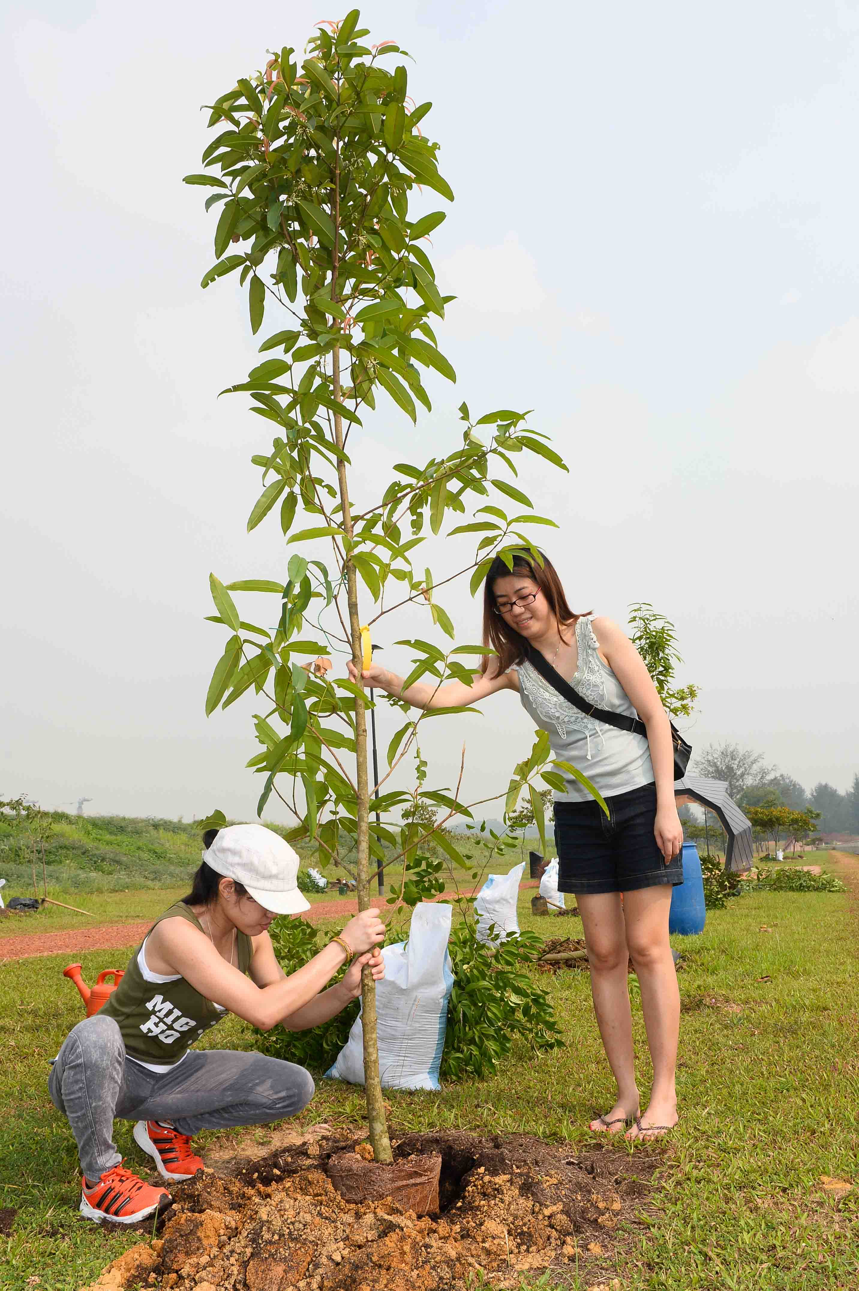 Planting Trees For A Greener Future