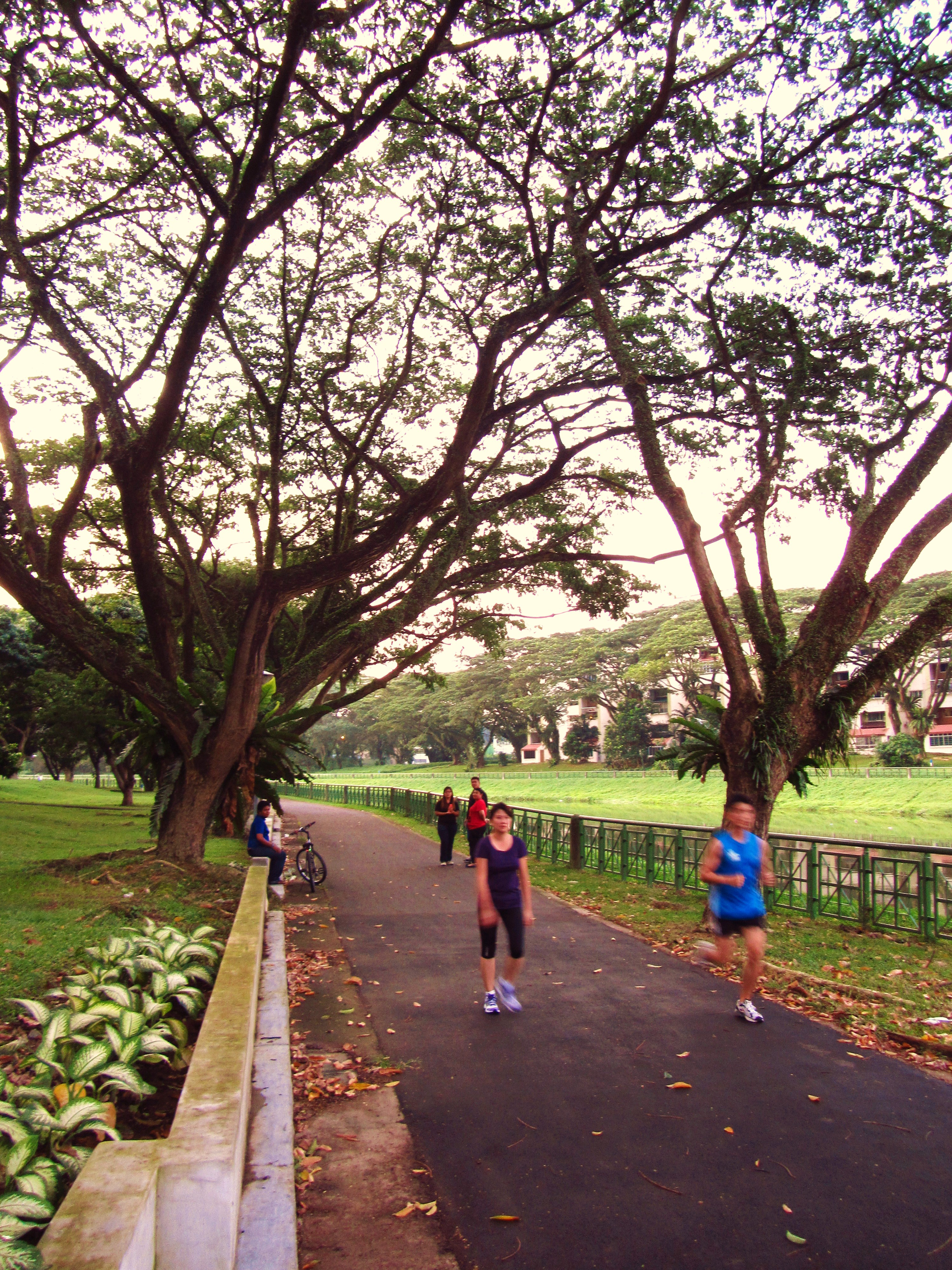 Explore The Less Trodden Path Along Kallang Park Connector