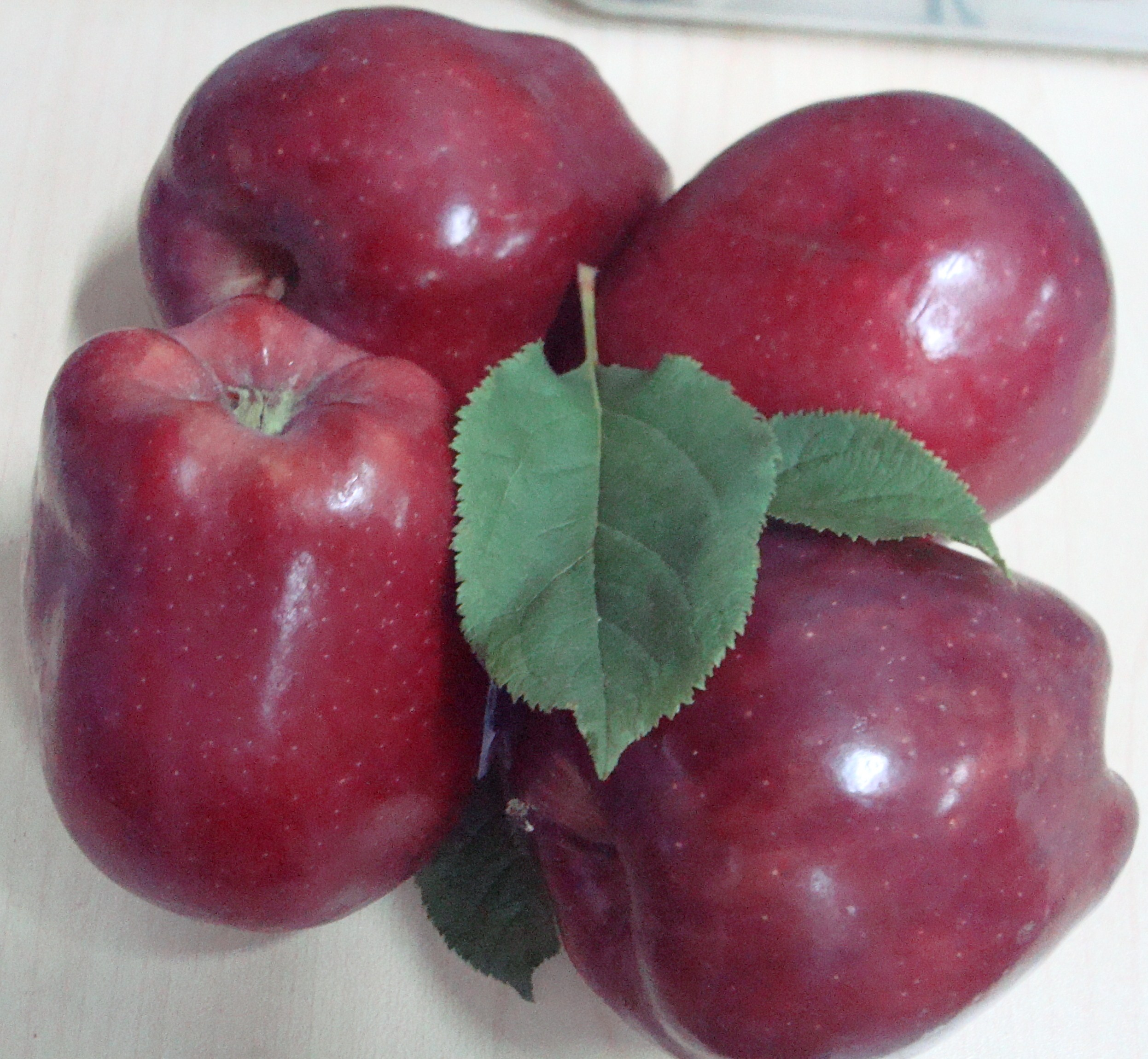 Grow An Apple Tree From Seed In Singapore?