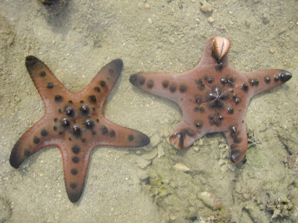 Seeing Stars in Singapore's Sea