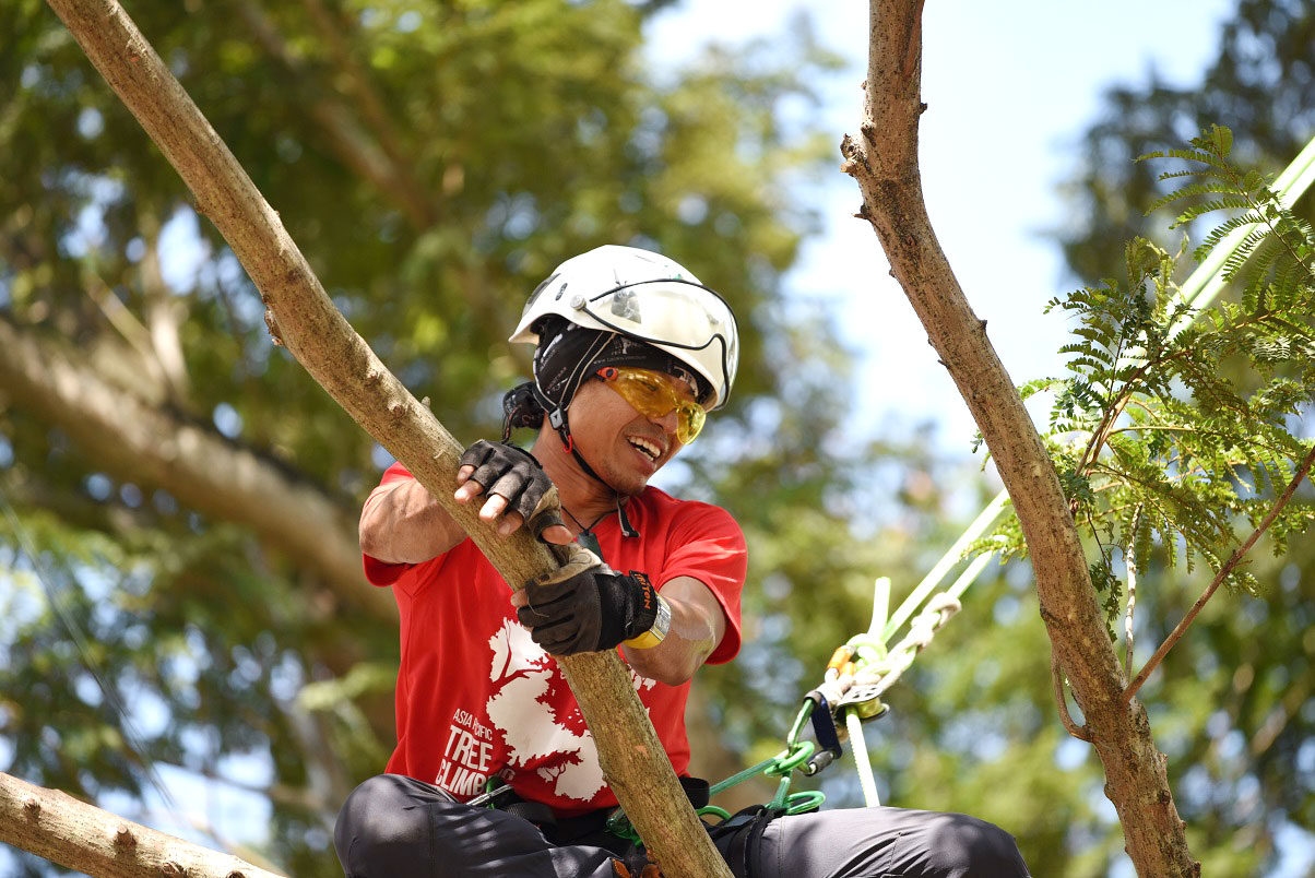 Arborists Climb to the Top