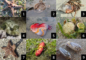 Intertidal Watch: Monitoring the Living Jewels on our Shores