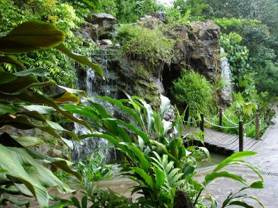 Waterfall In A Tropical Settings Singapore Botanic Gardens Hd Stock Clip