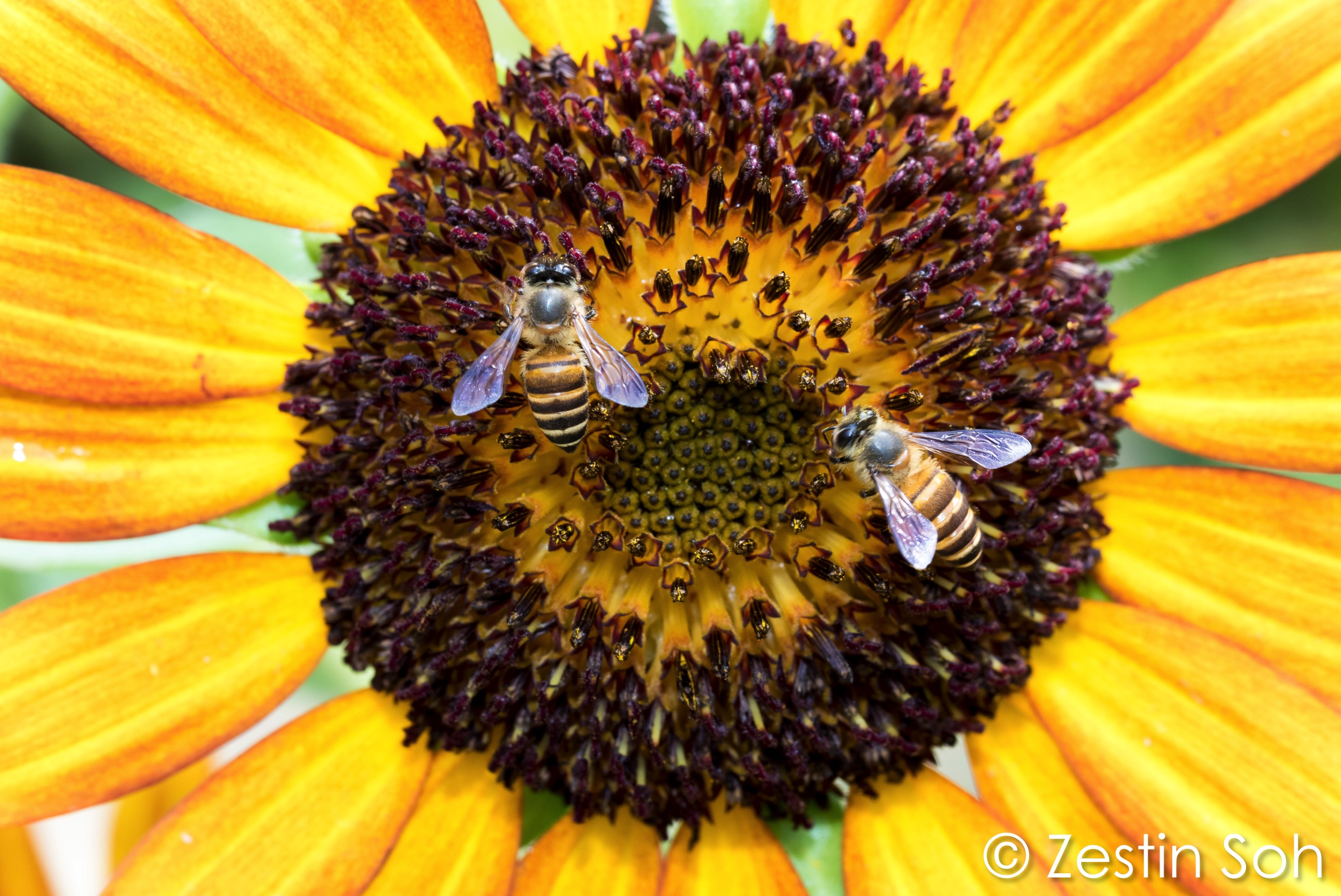 The Buzz In 'Bee-utiful' Community Gardens