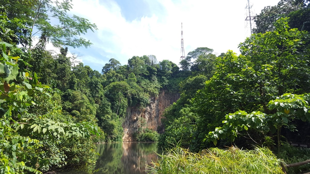 Optimized Bukit Batok Nature Park Credit National Parks Board