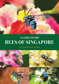 Bees of SG