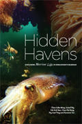 hidden haven thumbnail