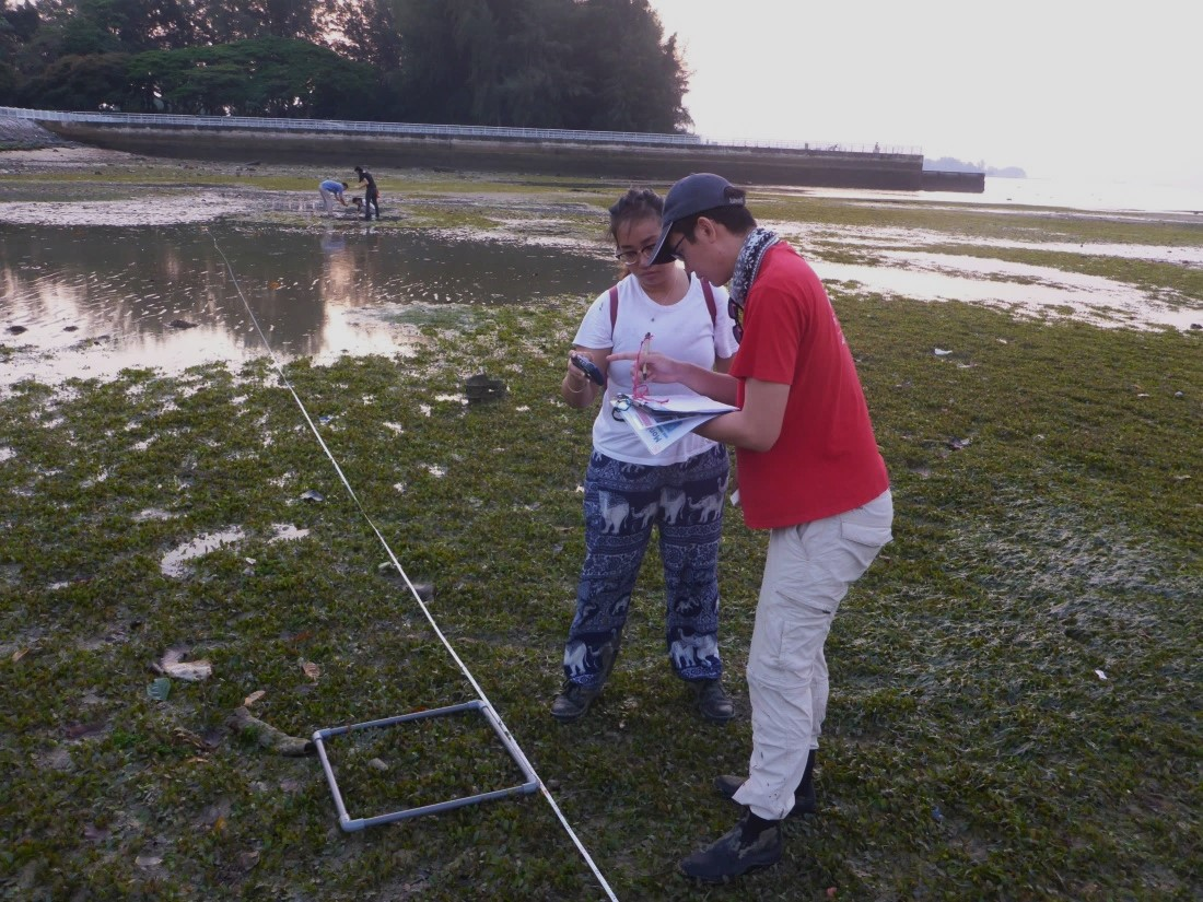 Intertidal Watch volunteers sampling within a quadrant