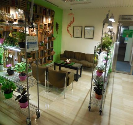 Image of a lush office with plant decor and indoor gardening, creating a more vibrant working environment
