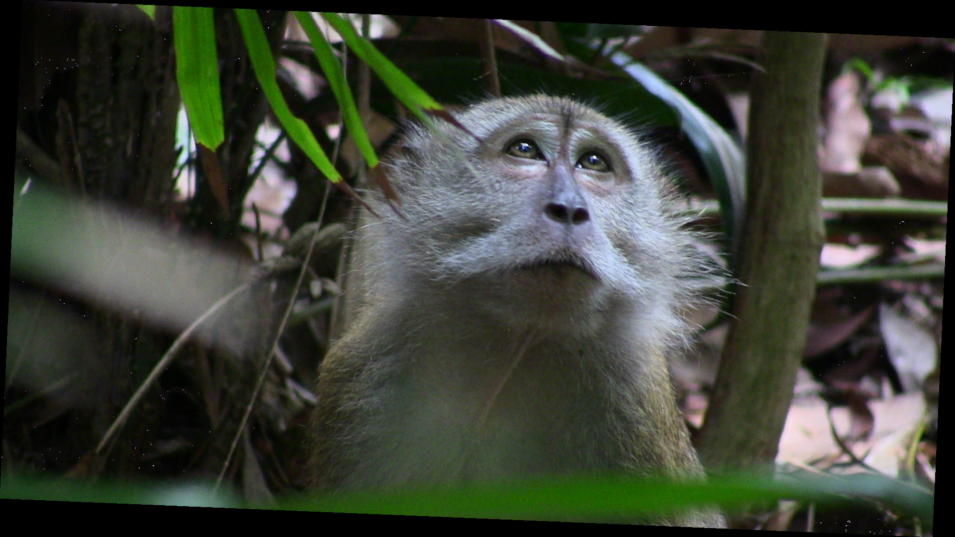 Macaques - Animal Encounters - Do's and Don'ts - Gardens