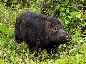 wild hogs full movie free watch