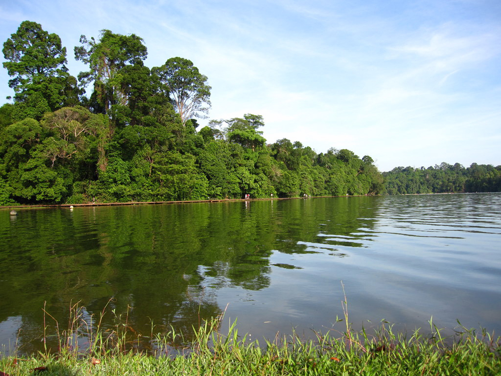 Macritchie Scenery
