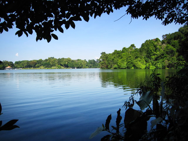 Macritchie Prunus Trail scenery