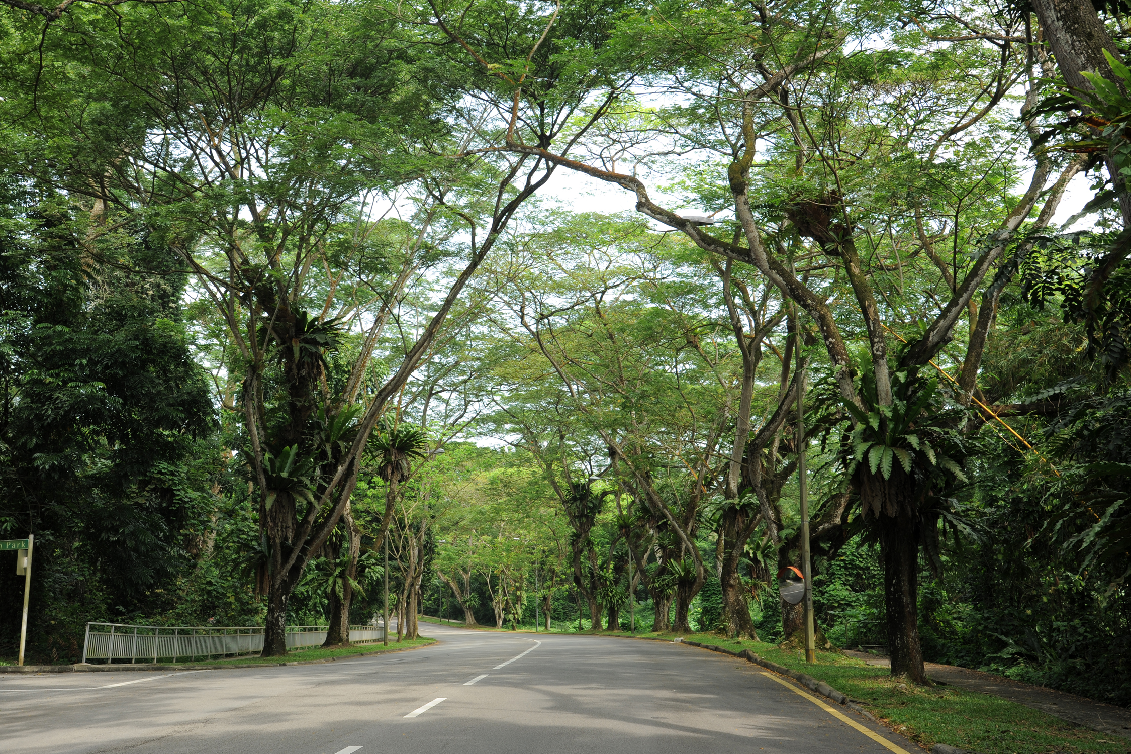 Arcadia Road - Heritage Roads - Gardens, Parks & Nature - National Parks Board (NParks)