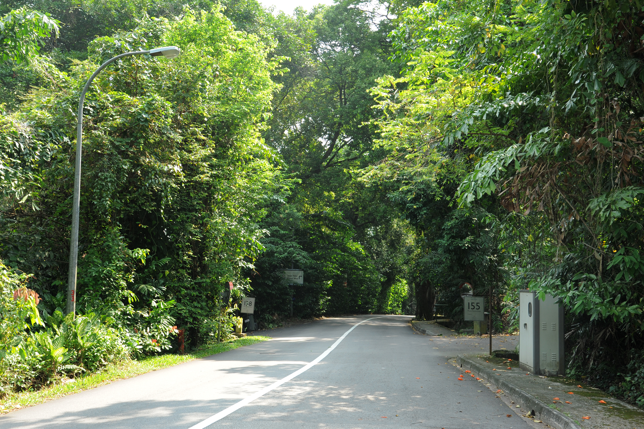 Mount Pleasant Road - Heritage Roads - Gardens, Parks & Nature - National Parks Board (NParks)