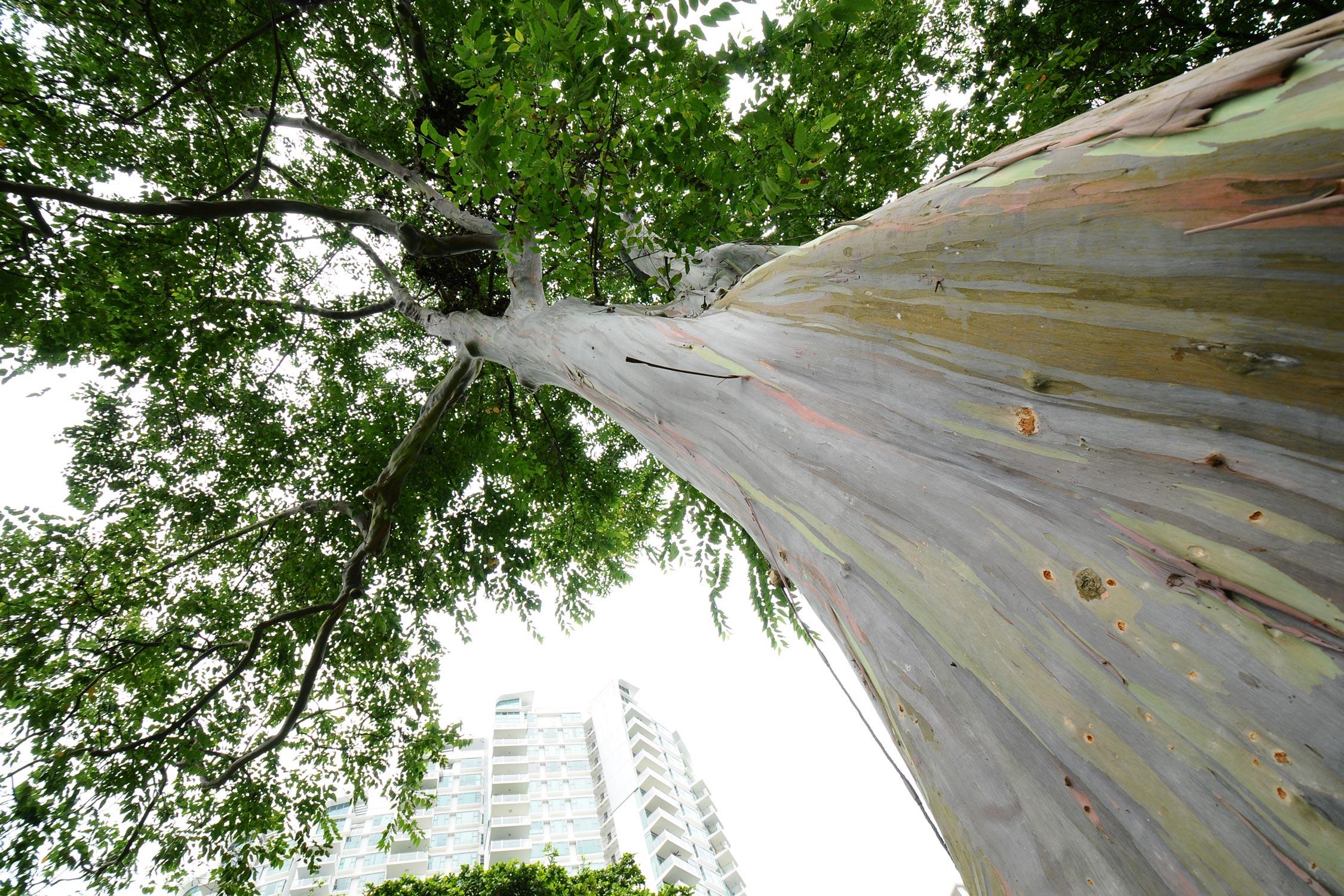 Heritage Tree Wallpaperscreensaver Heritage Trees Gardens