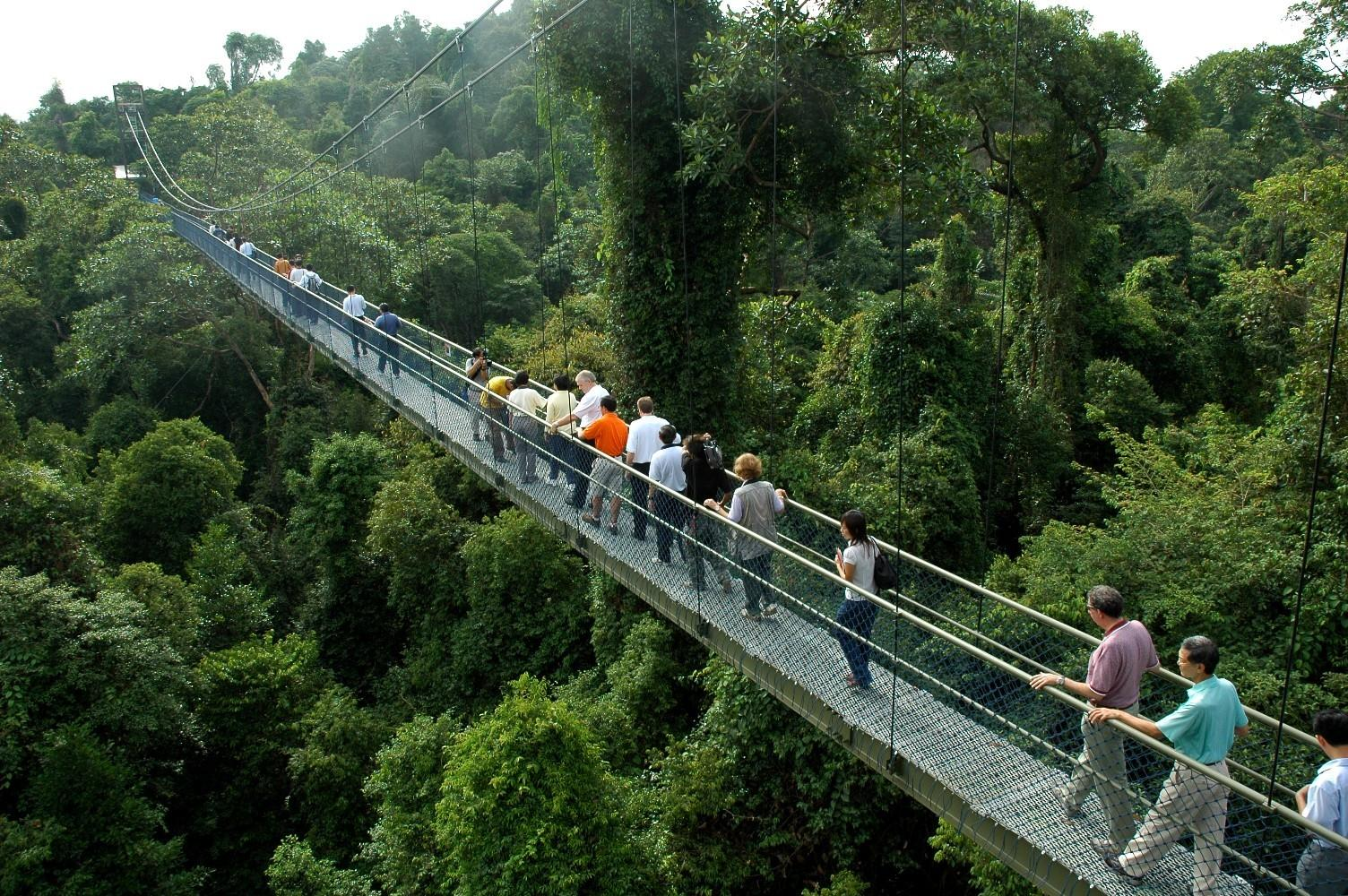 Image result for tree top walk singapore