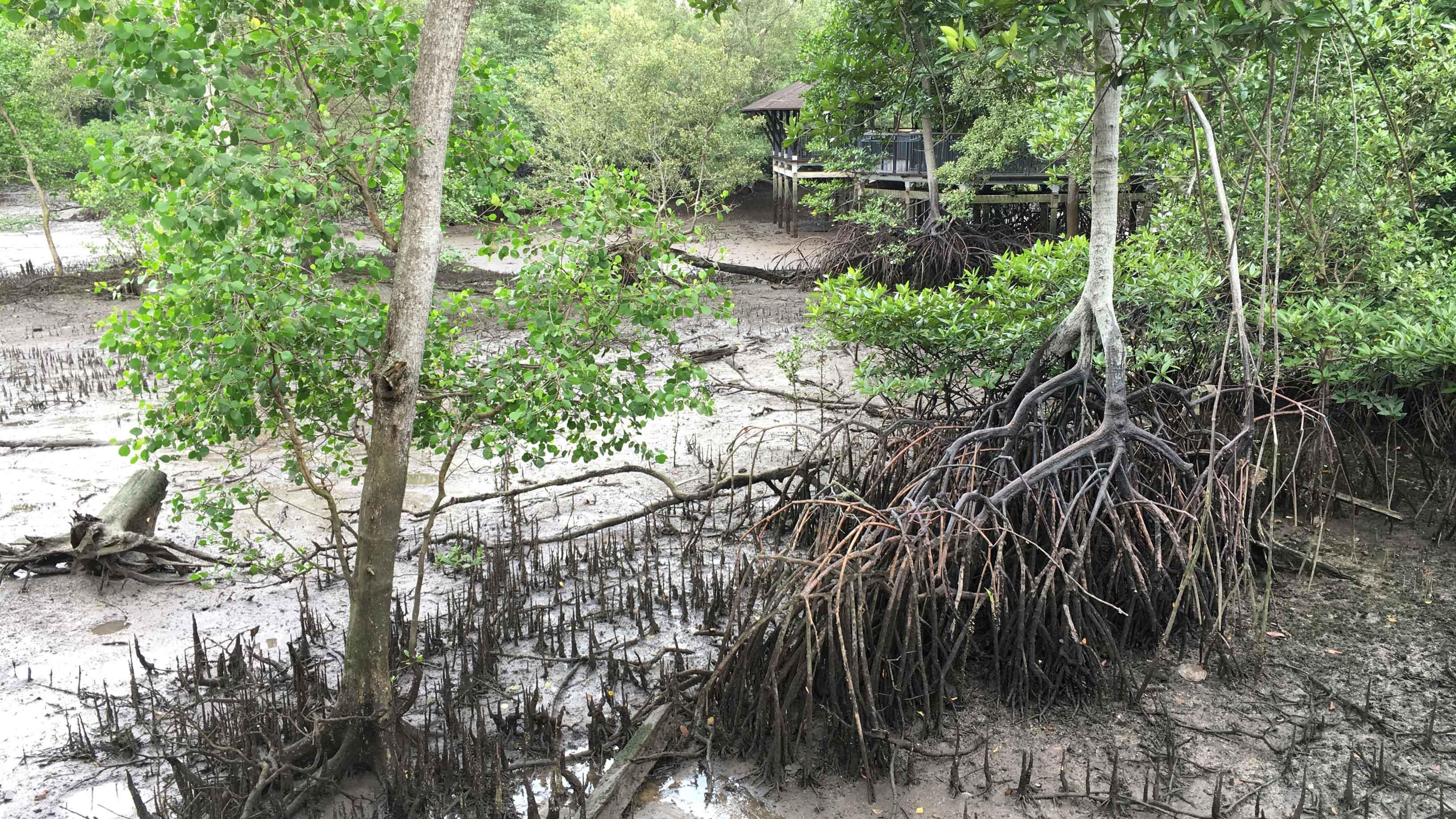 sungei buloh wetland reserve parks nature reserves gardens