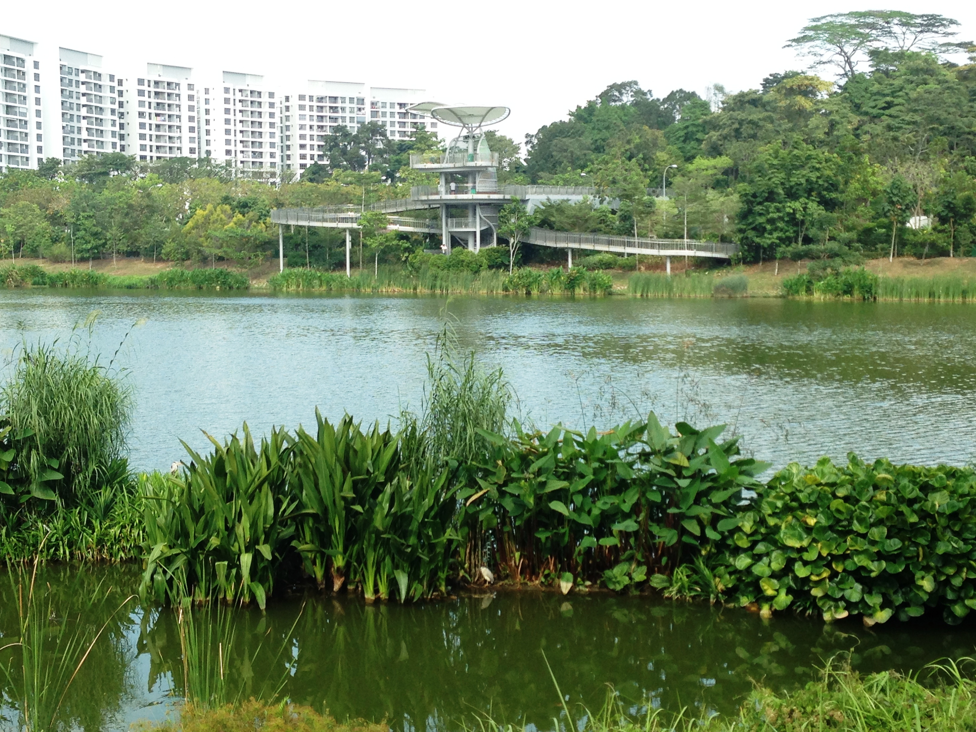 Yishun Pond Park Parks Nature Reserves Gardens Parks Nature National Parks Board Nparks