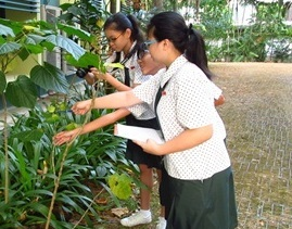 Biodiversity Week for Schools