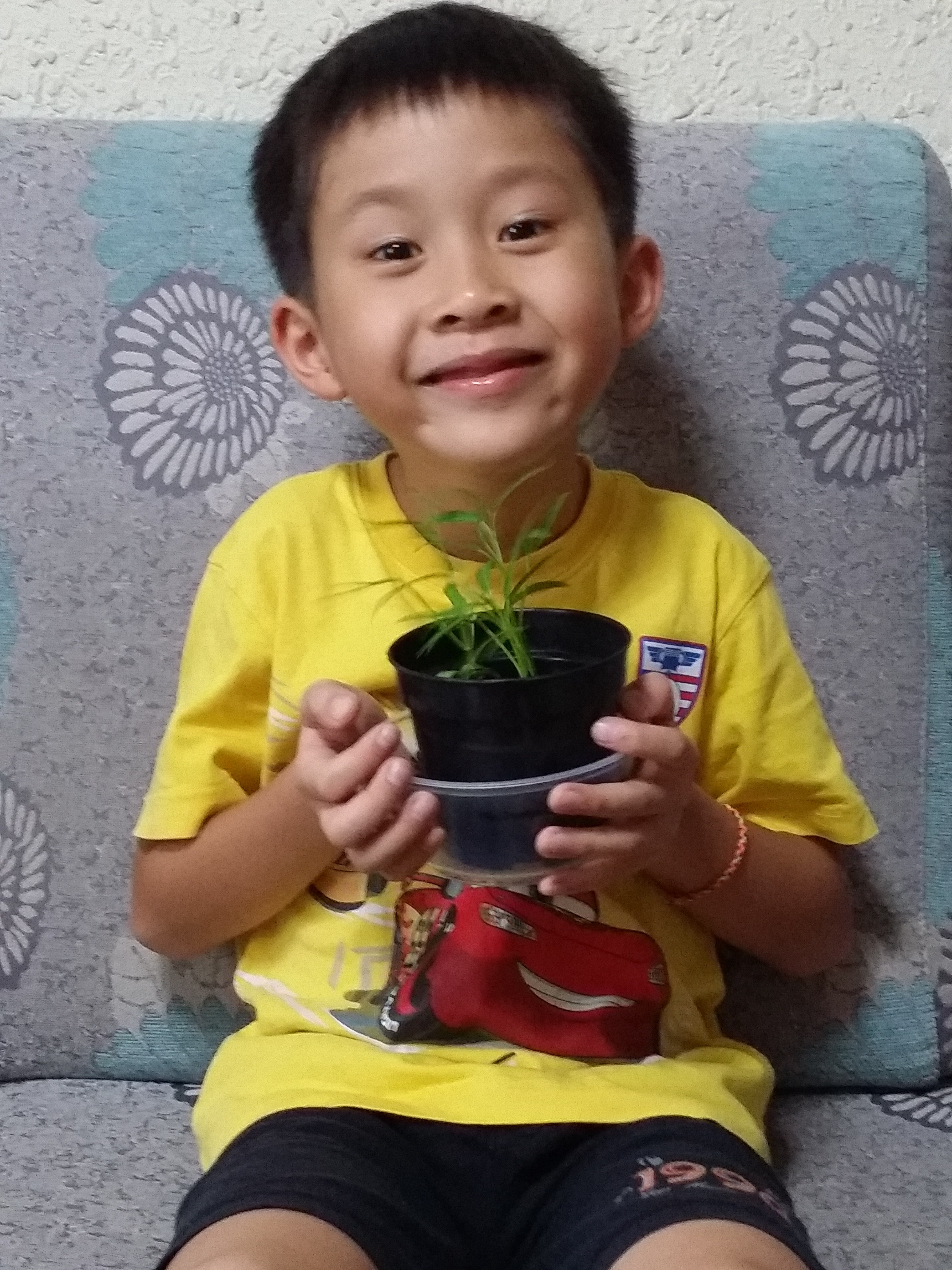 Lysander with plant