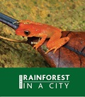 Rainforest in a City cover