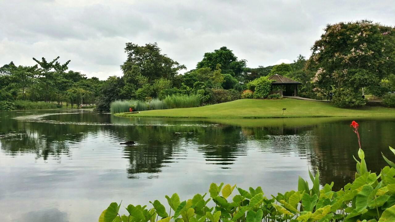 Image of the Eco Lake at Eco Garden.