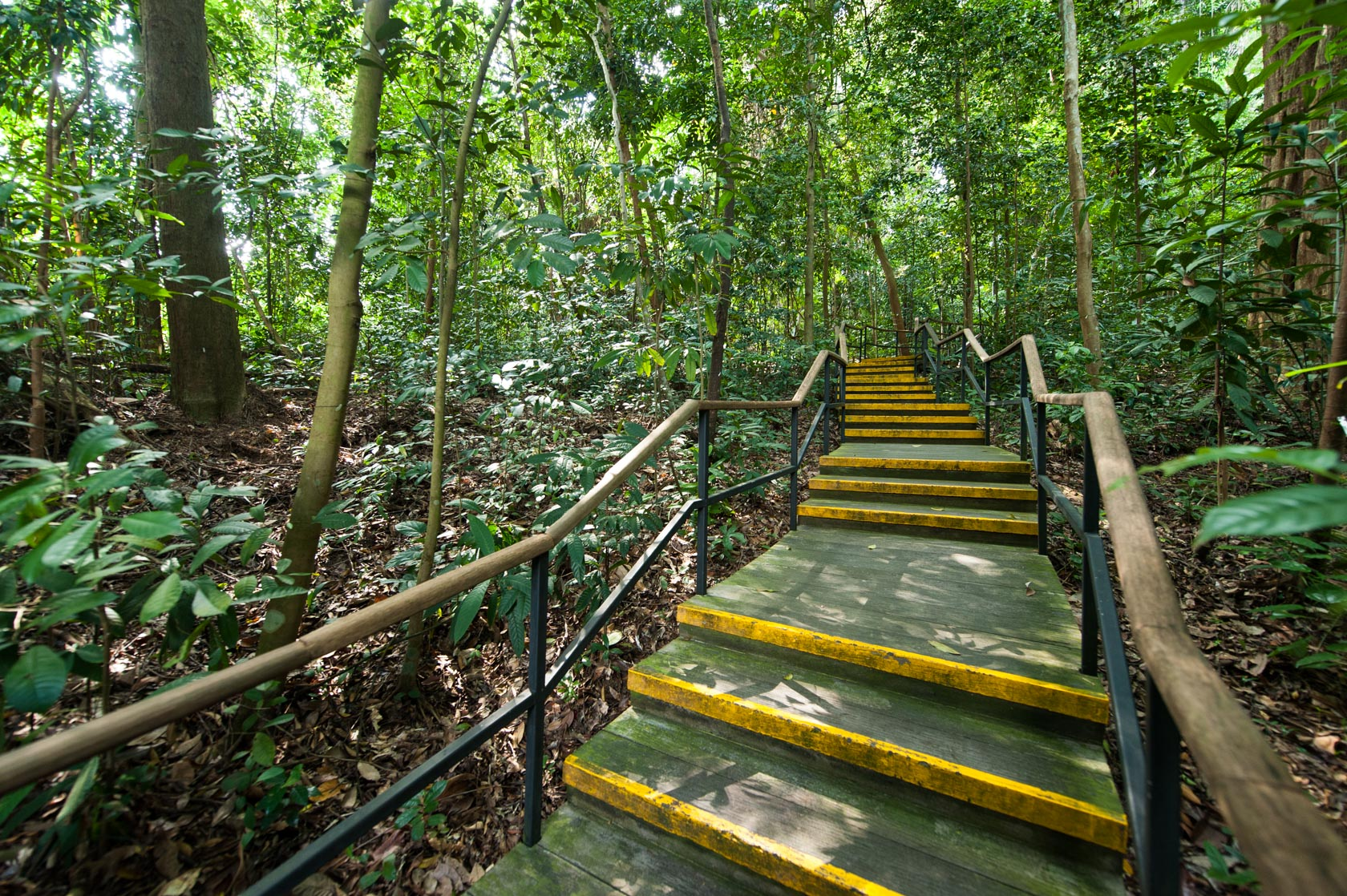 Stairway leading to the North entrance of the Rain Forest