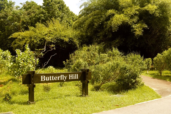 butterfly hill