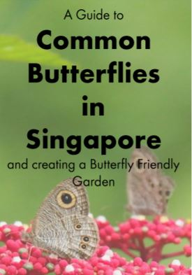 A Guide to Common Butterflies in Singapore, and creating a Butterfly Friendly Garden