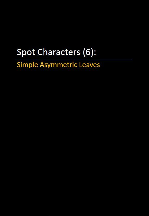 Spot Characters 6_Simple Asymmetric Leaves Pic