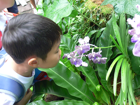 Image of child smelling a fragrant orchid during the National Orchid Garden tour.