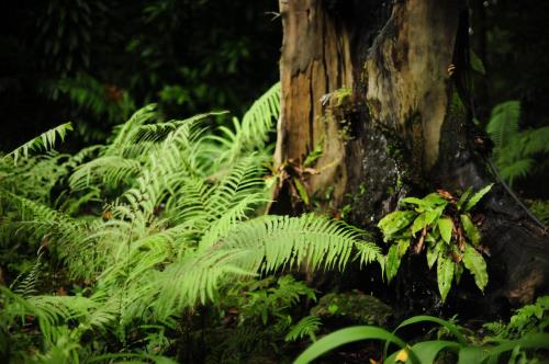 Image of Rain Forest.