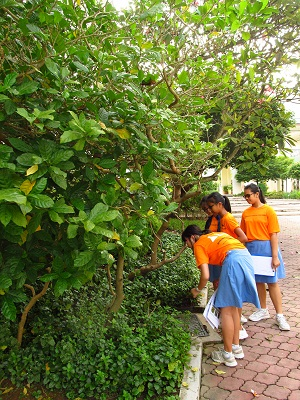 Community in Nature - Greening Schools for Biodiversity
