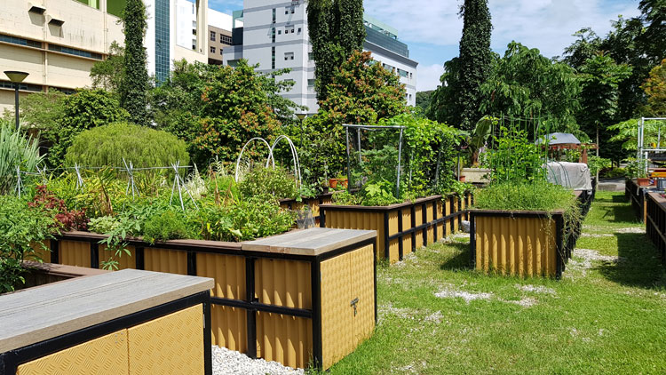 Indoor urban farming is it worth the efforts pluckgreens urban farming in hortpark workwithnaturefo