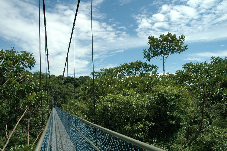 TreeTop Walk & TreeTop Walk - Central Catchment Nature Reserve - Parks u0026 Nature ...