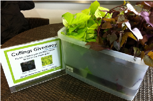 Plant Cuttings giveaway