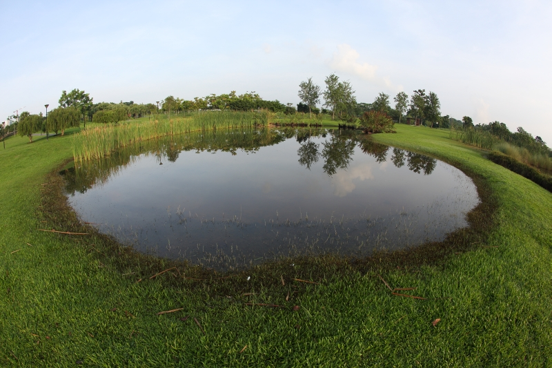 Photography view of Constructed wetlands at Sengkang Riverside Park